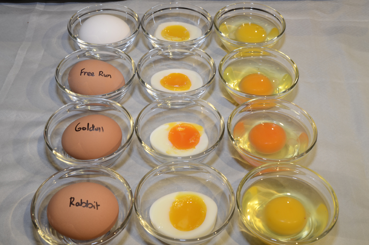difference between free range and organic eggs